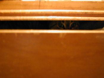 Morri_peeking
