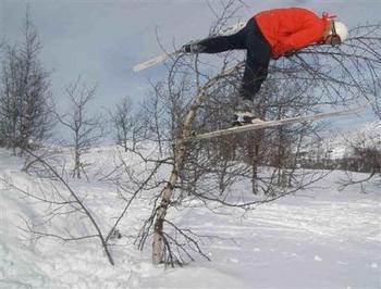 Treejumper